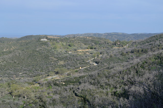 chaparral, trees, and a house on a hill