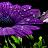 Valerie Mahaney avatar image