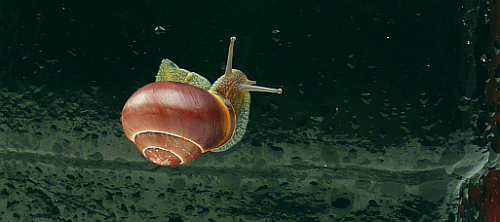 Snail on wet surface