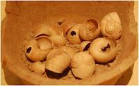 σαλιγκάρια,κοχλίοι,έδεσμα,φαγητό αρχαίων,snails, screws, delicacy, food ancient