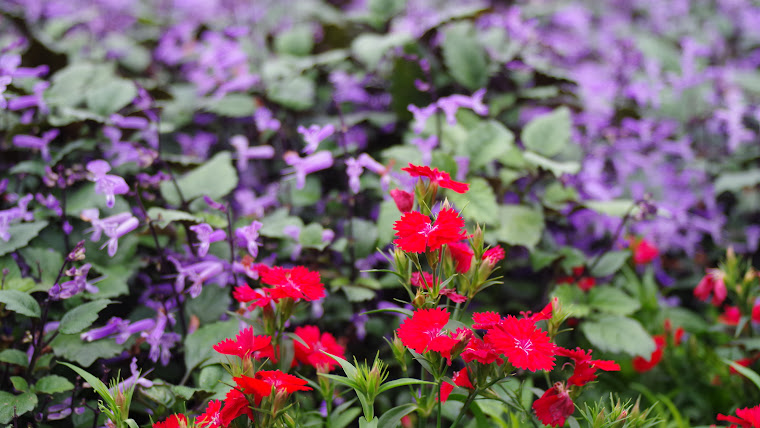 台北花卉展4