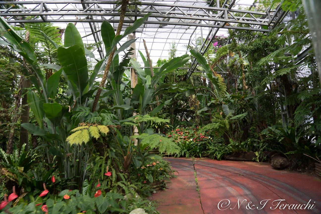 亜熱帯植物の色々