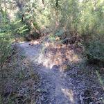 Flat Rock creek track (172335)