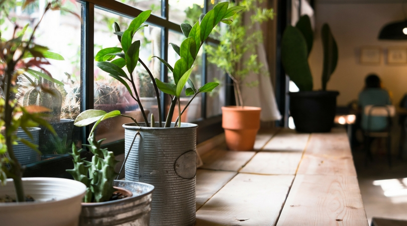 potted plants next to a window