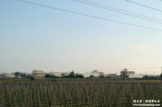溪湖糖廠巨峰葡萄