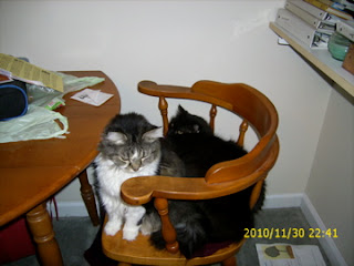 beasley and queenie on chair