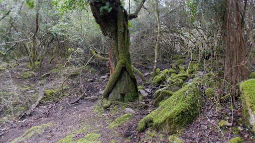 Les sous-bois du sentier de dsecente de Foce d'Ortu