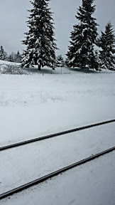 View from the Amtrak by Kelso as we escape Snowpacalypse PDX for Seattle