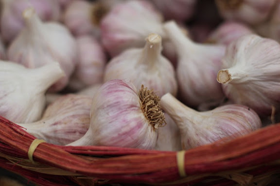 basket of slightly-purple garlic