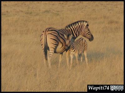 Balade australe... 11 jours en Namibie IMG_0341