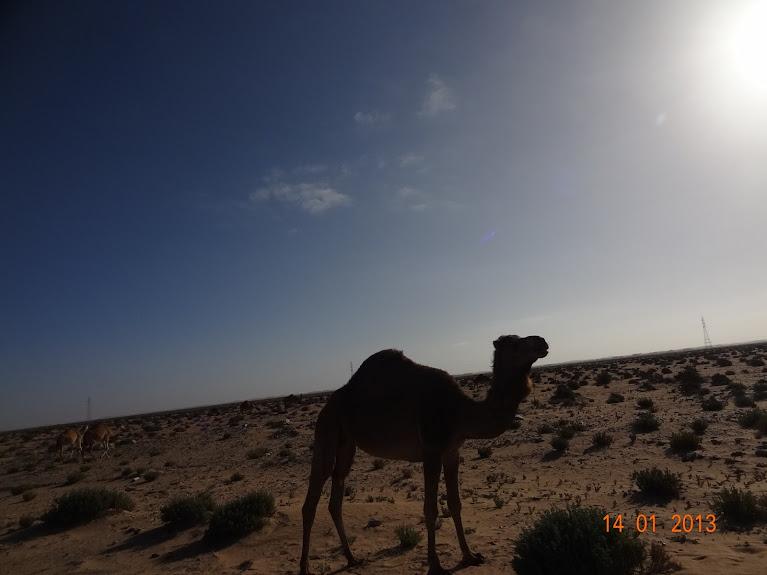 Marrocos e Mauritãnia a Queimar Pneu e Gasolina - Página 5 DSC05795