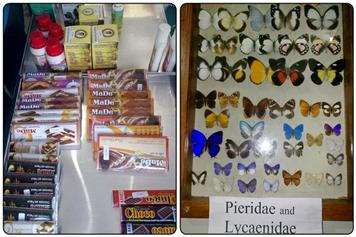 Kupu-Kupu, Cokelat dan Lotion Khas Papua