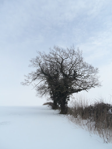 Winter tree near Easton on the Hill