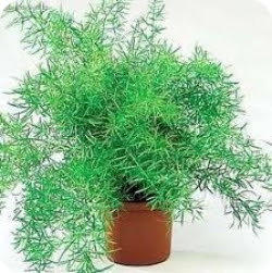 Комнатные растения обереги
