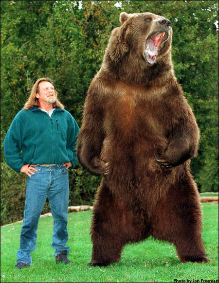 Urso pardo vs Urso polar - Página 2 Doug1