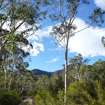 View of the escarpment from south of the Megalong Village site (411851)