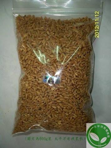 小麥 / 貓草種子