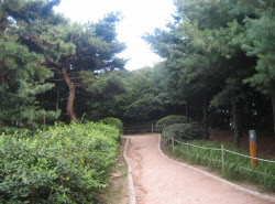 오패산 숲길