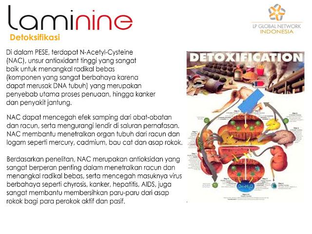 laminine untuk detoksifikasi