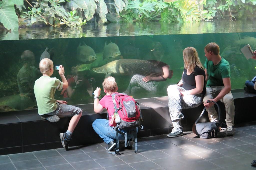 Vor allem die Becken mit den großen Fischen beeindrucken