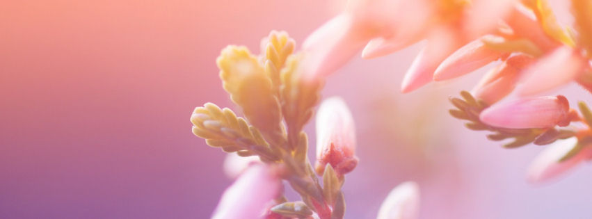 Morning blossom facebook cover