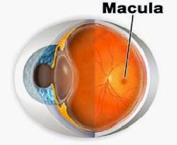 Mirtoplus Herbal Mata Untuk Degenerasi Makula