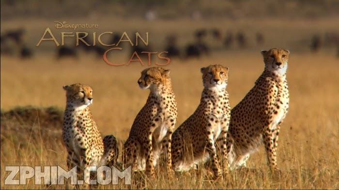 Ảnh trong phim Báo Châu Phi - African Cats 2