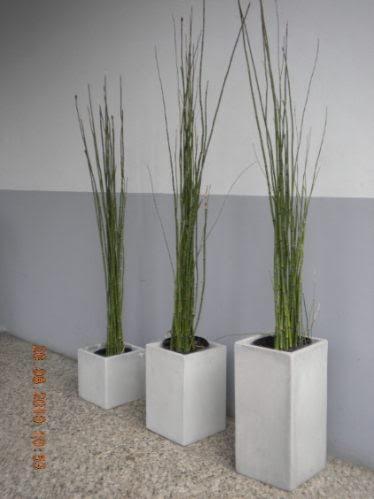 Planta decorativa para parques y jardines decoractual for Decoracion de parques y jardines