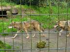 2014-09-28 BVA Tierpark Nordhorn