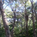 Terrys Creek track south of M2 (24925)