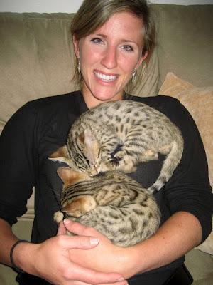 Bengal Kittens Cuddling
