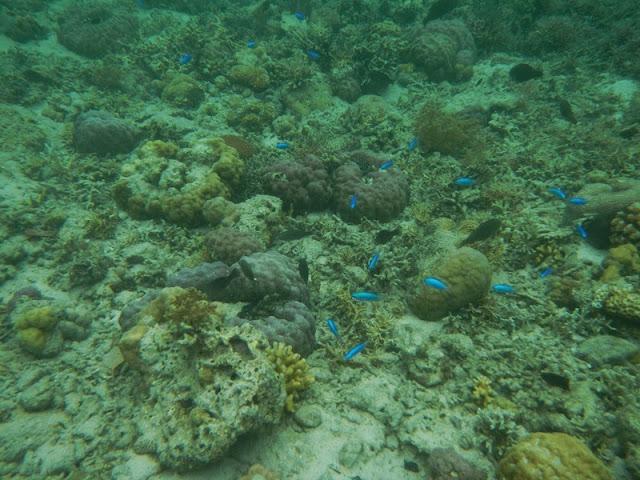 Biota bawah laut di Pulau Menjangan