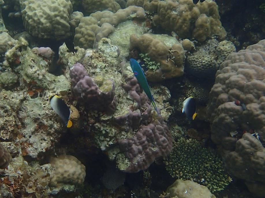 Reef, Sand Island, Palawan, Philippines.
