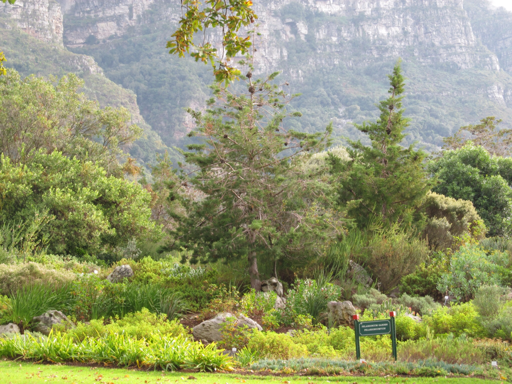 Broadbent Bells In Africa Garden Of Eden