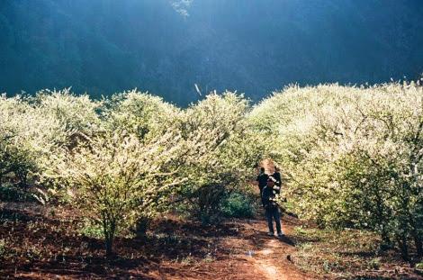 hoa man moc chau pys travel003 Mộc Châu mùa xuân   Thiên đường mận trắng