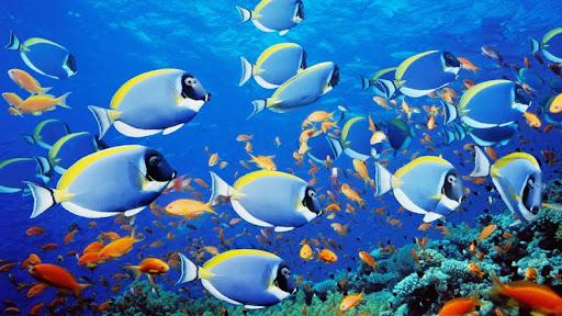 School of Fish, Thailand.jpg