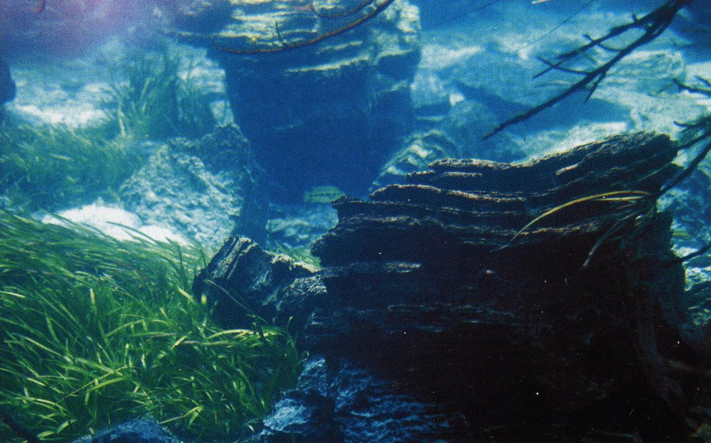 Здесь показана одна из заводей с каменистыми образованиями на заднем плане и зарослями Vallisneria aethiopica на переднем. В своей нижней части озеро отличается довольно сильным течением, заметном на этом подводном фото.