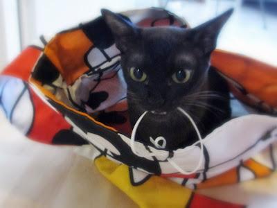 Kissankuljetuskassi lelulla varustettuna