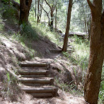steps leading up into the Brisbane Waters National Park (19530)