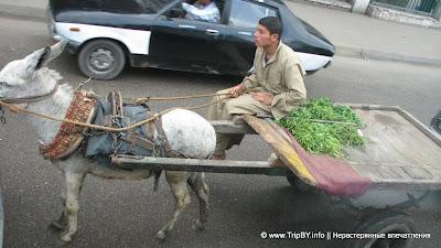 Ишак в Каире by TripBY.info