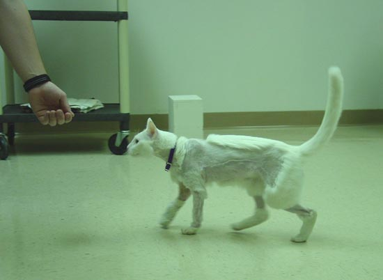 Functional gait and grooming of that limb