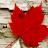 Geri Fargher avatar image