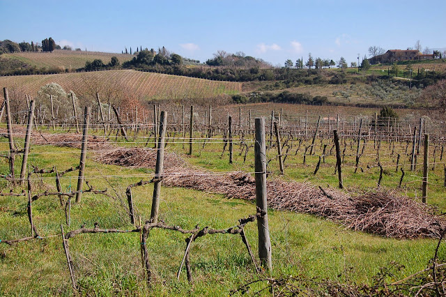 Cut off wood in a pruned vineyard and near Castelnuovo dell'Abate