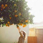 Сон апельсины