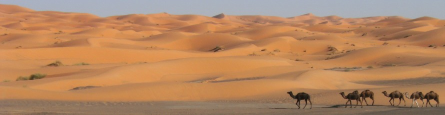 Dromedare vor Sand-Dünen von Erg Chebbi, Tafilalet, Marokko