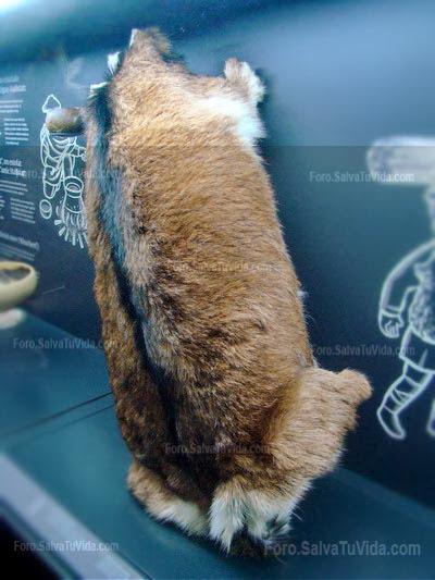 Museo Marq Alicante - Hallstatt el reino de la sal DSC09601