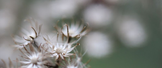 dried-out flowers