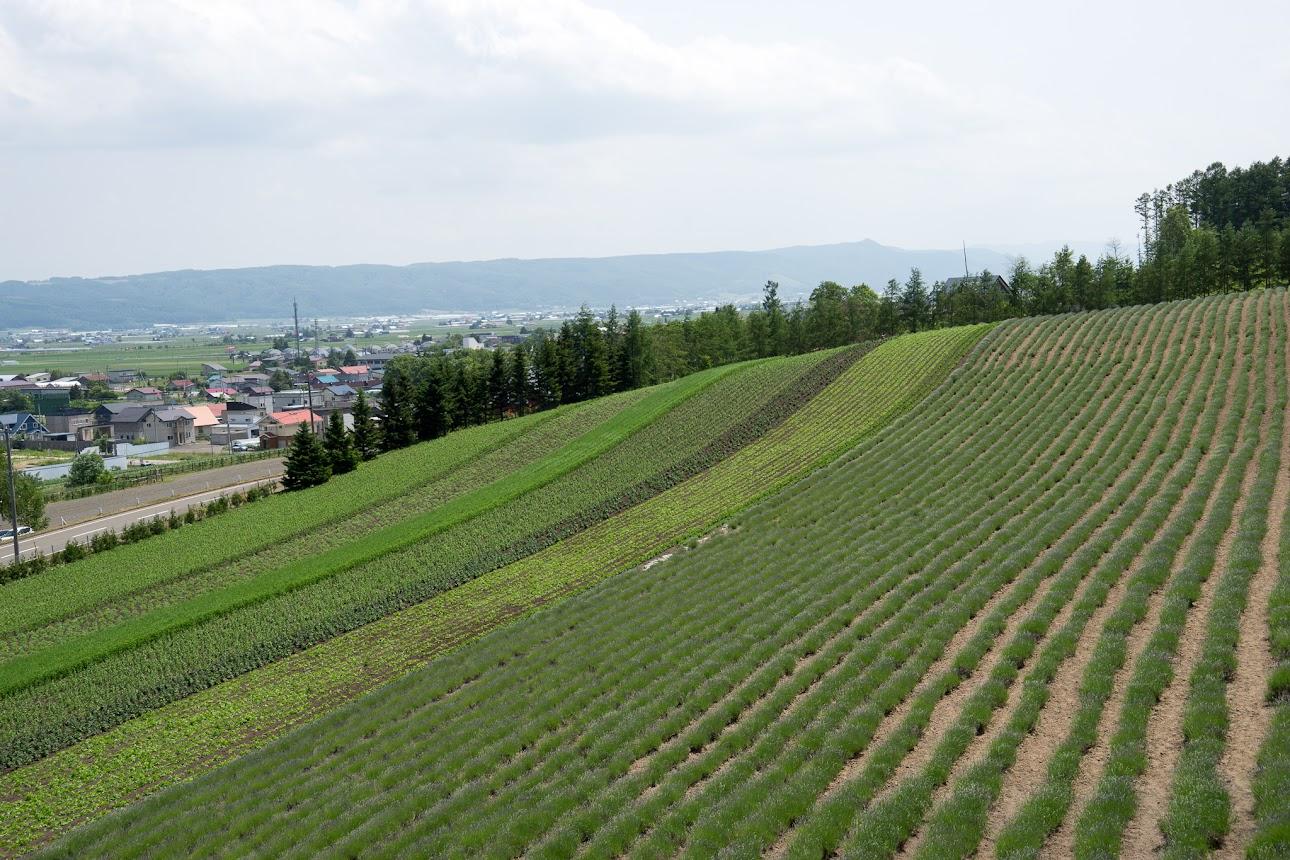緑一色の畑