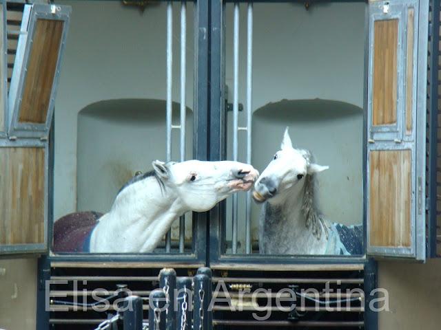 Escuela Española de Equitación, Viena, Austria, Elisa N, Blog de Viajes, Lifestyle, Travel