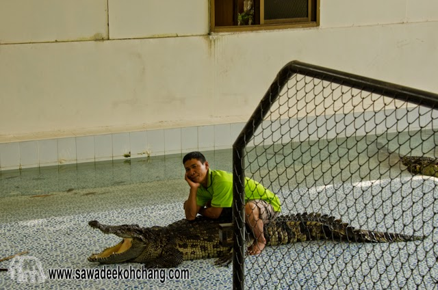 Baan Chivit Crocodiles and Snakes show